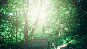 Πορεία στο φυλλώδες πράσινο δάσος με το μπάλωμα έντονου φωτός του απεικονισμένου φωτός στη θερινή ημέρα απόθεμα βίντεο