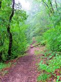 Πορεία τουριστών στο πράσινο δάσος σε Turda, Transsylvania, Ρουμανία στοκ φωτογραφία με δικαίωμα ελεύθερης χρήσης