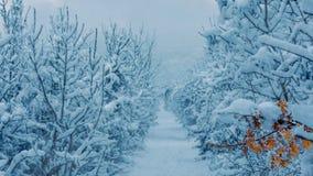Πορεία του χειμερινού περιπάτου Στοκ φωτογραφίες με δικαίωμα ελεύθερης χρήσης