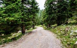 Πορεία του Forrest ή οδικό ίχνος βουνών που οδηγεί στο άπειρο Στοκ εικόνα με δικαίωμα ελεύθερης χρήσης