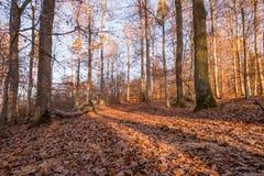 Πορεία του Forrest με τον ήλιο στις αιχμές των γραμμάτων Τ το χειμώνα στο μικρόβιο Στοκ φωτογραφίες με δικαίωμα ελεύθερης χρήσης