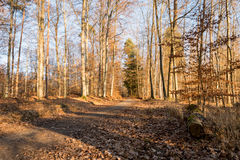 Πορεία του Forrest με τον ήλιο στις αιχμές των γραμμάτων Τ το χειμώνα στο μικρόβιο Στοκ Εικόνες