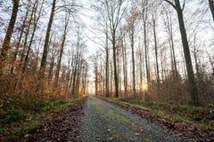 Πορεία του Forrest με τον ήλιο στις αιχμές των γραμμάτων Τ το χειμώνα στο μικρόβιο Στοκ φωτογραφία με δικαίωμα ελεύθερης χρήσης