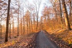 Πορεία του Forrest με τον ήλιο στις αιχμές των γραμμάτων Τ το χειμώνα στο μικρόβιο Στοκ Φωτογραφίες