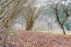 Πορεία του Forrest με τον ήλιο στις αιχμές των γραμμάτων Τ το χειμώνα στο μικρόβιο Στοκ Φωτογραφία