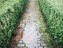 Πορεία τούβλου στη βροχή Στοκ φωτογραφία με δικαίωμα ελεύθερης χρήσης