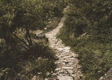 Πορεία των πετρών που τρέχει μέσω ενός πολύβλαστου δάσους στοκ εικόνα