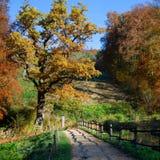 Πορεία φθινοπώρου με μια σκιά από τον ξύλινο φράκτη Στοκ εικόνες με δικαίωμα ελεύθερης χρήσης
