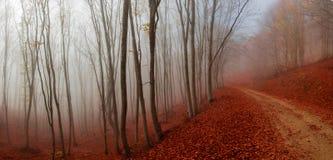 Πορεία φθινοπώρου στοκ φωτογραφία με δικαίωμα ελεύθερης χρήσης