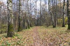 Πορεία φθινοπώρου στοκ εικόνες