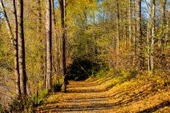 Πορεία φθινοπώρου ` s των χρυσών φύλλων Στοκ Φωτογραφίες