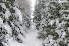 Πορεία χειμερινών βουνών μεταξύ των χιονισμένων δέντρων Στοκ Εικόνα