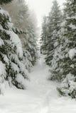 Πορεία χειμερινών βουνών μεταξύ των χιονισμένων δέντρων Στοκ Φωτογραφίες