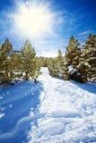 Πορεία χιονιού στο χιονώδες δάσος βουνών Στοκ φωτογραφία με δικαίωμα ελεύθερης χρήσης