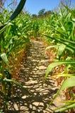Πορεία cornfield Στοκ Εικόνα