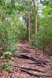 Πορεία Difficuly - ίχνος περπατήματος μέσω του τροπικού δάσους με τις ρίζες των δέντρων στο έδαφος στοκ φωτογραφία με δικαίωμα ελεύθερης χρήσης