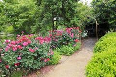 Πορεία Rose Garden Στοκ Εικόνες