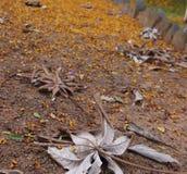 πορείες στον κήπο της ελπίδας στοκ φωτογραφίες