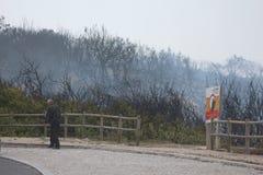 Πορτογαλικό δασικό κάψιμο Στοκ εικόνες με δικαίωμα ελεύθερης χρήσης
