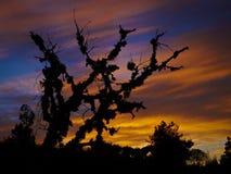 Πορτογαλικό λαμπρό πορτοκαλί, πορφυρό ηλιοβασίλεμα στοκ φωτογραφίες με δικαίωμα ελεύθερης χρήσης