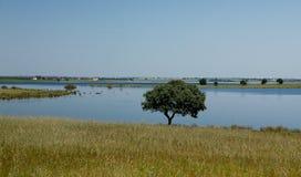 Πορτογαλία Αλεντέιο Aljustrel Στοκ φωτογραφία με δικαίωμα ελεύθερης χρήσης