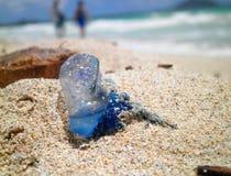 Πορτογαλικό άτομο O&#x27 Πόλεμος στην ηλιόλουστη παραλία Στοκ φωτογραφίες με δικαίωμα ελεύθερης χρήσης