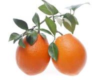 πορτοκάλια δύο Στοκ Φωτογραφίες
