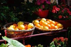Πορτοκάλια στα ψάθινα καλάθια, Mdina Στοκ φωτογραφία με δικαίωμα ελεύθερης χρήσης