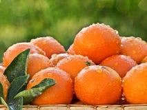 πορτοκάλια χλόης καλαθ&iot Στοκ Φωτογραφία