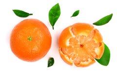 Πορτοκάλι ή tangerine με τα φύλλα που απομονώνονται στο άσπρο υπόβαθρο Επίπεδος βάλτε, τοπ άποψη Σύνθεση φρούτων στοκ εικόνα