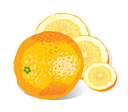 πορτοκάλι απεικόνισης διανυσματική απεικόνιση