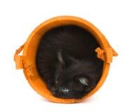 πορτοκάλι γατακιών βαρε&la Στοκ Εικόνα