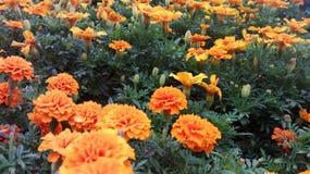 Πορτοκάλι καρναβαλιού Στοκ Εικόνες
