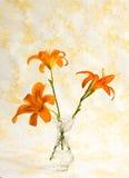 πορτοκάλι κρίνων στοκ φωτογραφίες με δικαίωμα ελεύθερης χρήσης