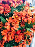 πορτοκάλι λουλουδιών στοκ εικόνα με δικαίωμα ελεύθερης χρήσης