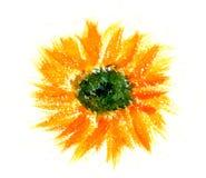 πορτοκάλι λουλουδιών διανυσματική απεικόνιση