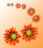 πορτοκάλι λουλουδιών απεικόνιση αποθεμάτων