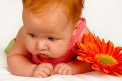 πορτοκάλι μωρών Στοκ Φωτογραφίες