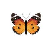 πορτοκάλι πεταλούδων Στοκ εικόνα με δικαίωμα ελεύθερης χρήσης