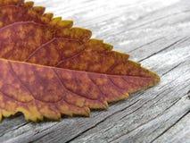 Πορτοκάλι φθινοπώρου στοκ εικόνα