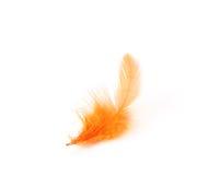 πορτοκάλι φτερών στοκ φωτογραφίες με δικαίωμα ελεύθερης χρήσης