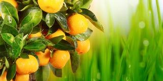 πορτοκάλι φύλλων κλάδων Στοκ εικόνα με δικαίωμα ελεύθερης χρήσης