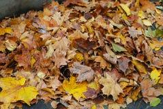 πορτοκάλι φύλλων ομάδας ανασκόπησης φθινοπώρου υπαίθριο υπαίθριος Υπόβαθρο Parck Στοκ φωτογραφία με δικαίωμα ελεύθερης χρήσης