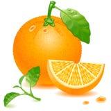 πορτοκάλι διανυσματική απεικόνιση