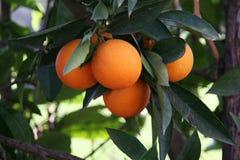 πορτοκάλι Στοκ εικόνα με δικαίωμα ελεύθερης χρήσης