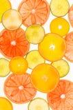 πορτοκάλια ασβεστών λεμονιών εσπεριδοειδών στενός δίσκος χρωμάτων έννοιας επάνω στο watercolor ποικιλίας τρόφιμα υγιή αφηρημένη τ Στοκ εικόνα με δικαίωμα ελεύθερης χρήσης