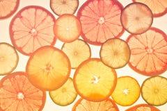 πορτοκάλια ασβεστών λεμονιών εσπεριδοειδών στενός δίσκος χρωμάτων έννοιας επάνω στο watercolor ποικιλίας τρόφιμα υγιή αφηρημένη τ Στοκ Εικόνα