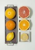 πορτοκάλια ασβεστών λεμονιών εσπεριδοειδών Στοκ εικόνα με δικαίωμα ελεύθερης χρήσης