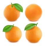 Πορτοκάλια καθορισμένα απομονωμένα στο άσπρο υπόβαθρο Στοκ Φωτογραφία