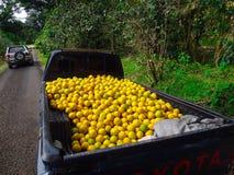 Πορτοκάλια στο πίσω μέρος του φορτηγού Στοκ φωτογραφία με δικαίωμα ελεύθερης χρήσης